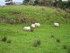 irsko-krajina-07jpg